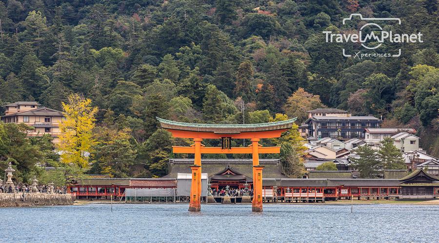 023-JapanRedLeaf-0268