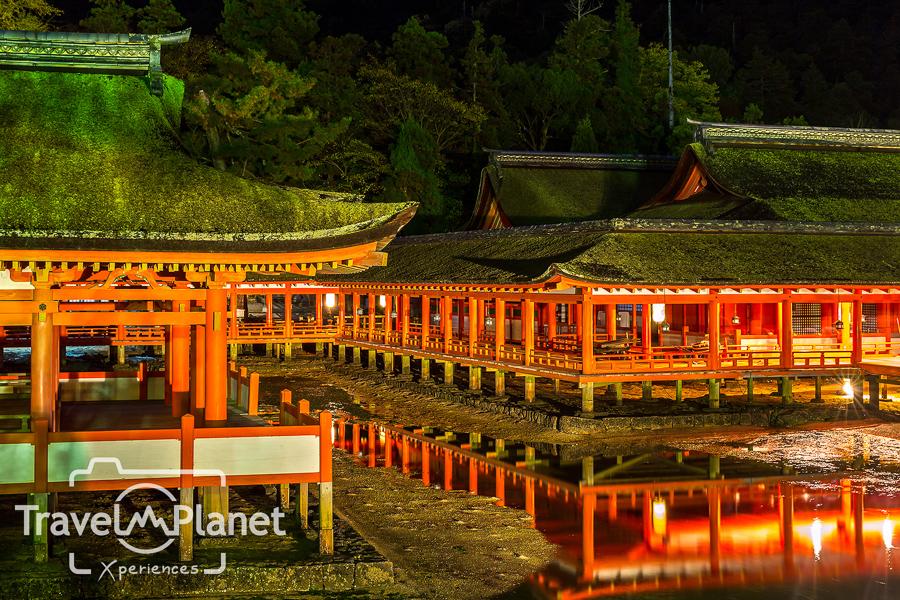 033-JapanRedLeaf-0468