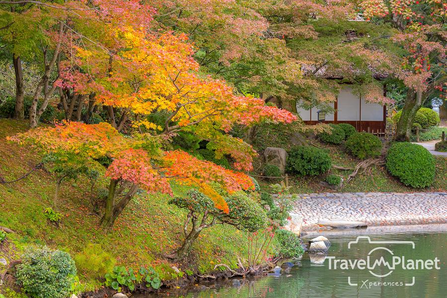 036-JapanRedLeaf-0508