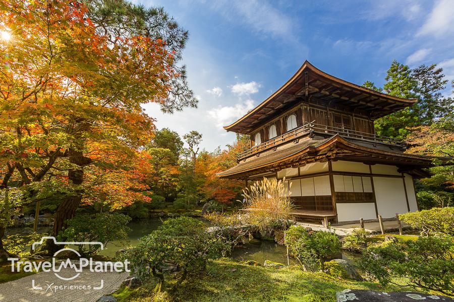 050-JapanRedLeaf-0743