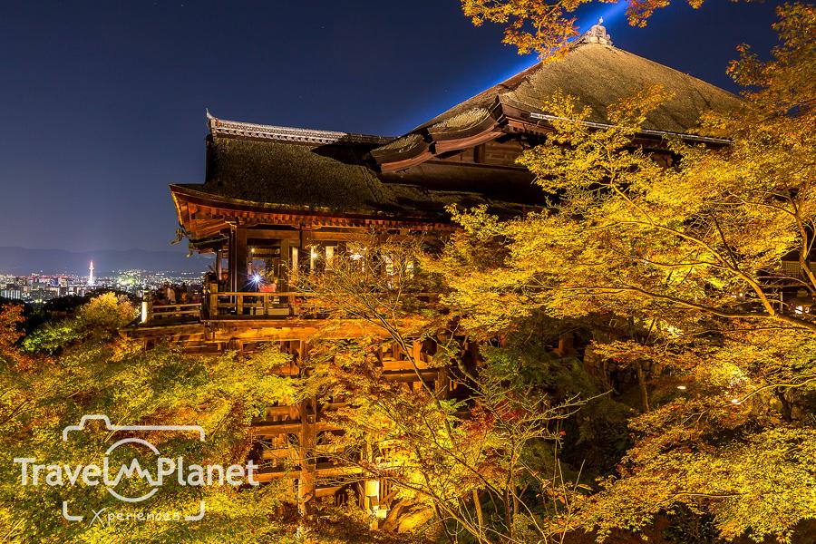 061-JapanRedLeaf-0644