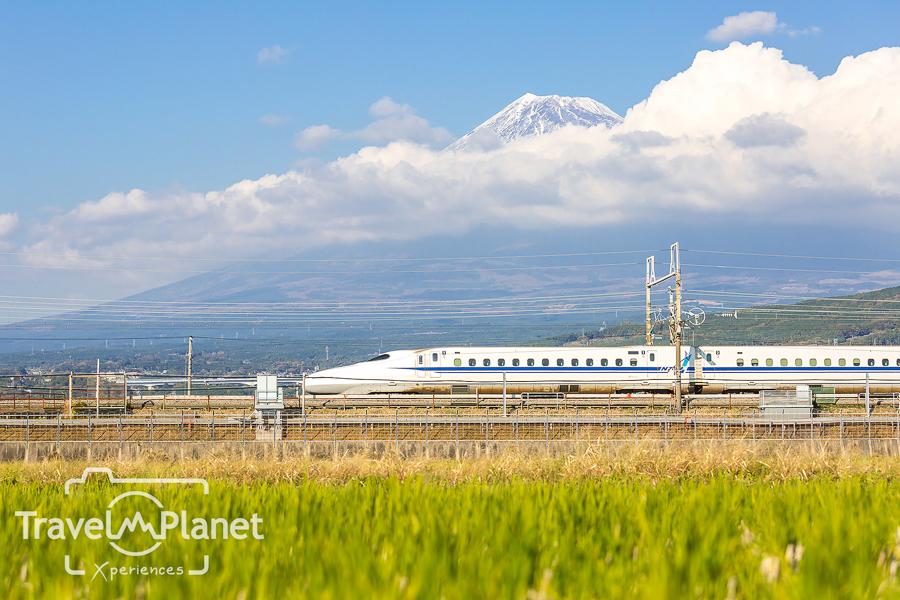 103-JapanRedLeaf-3139