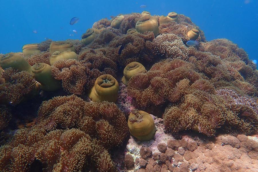 ทะเลพม่า เกาะนาวโอพี เกาะช้างเผือก Cockburn Nyaung oo phee island